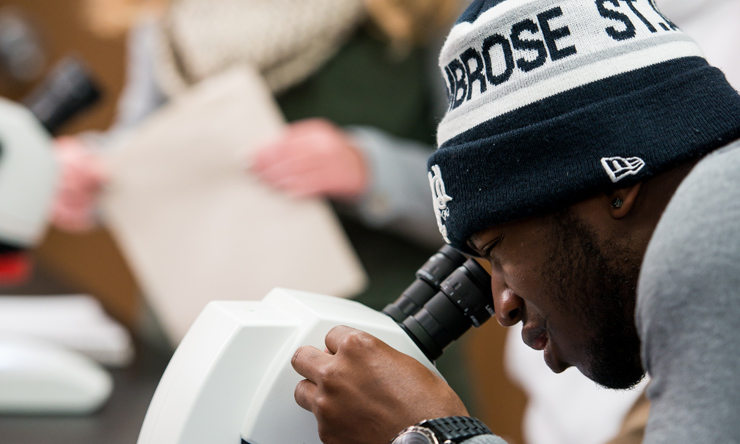 looking in microscope
